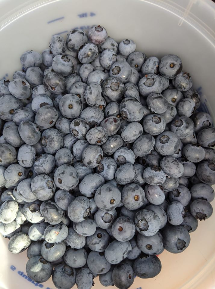Good Things: Blueberries For A Great Cause